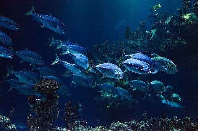 Akwarystyka dla początkujących – czyli jak założyć pierwsze akwarium?